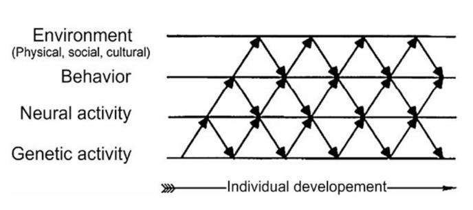Dev System